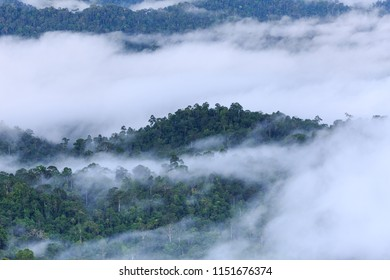 The landscape photo, beautiful sea fog in morning time in Thailand