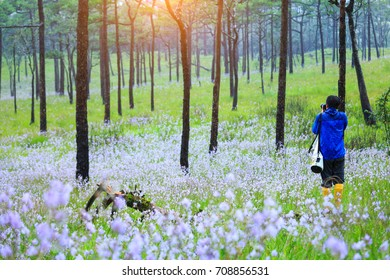 The landscape photo, beautiful wildflowers with green grass in rain forest, Phu Soi Dao National Park, Thailand