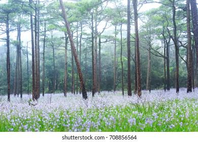 The landscape photo, beautiful wildflowers with green grass in rain forest, Phu Soi Dao National Park, Thailand (focus on nearest flower)