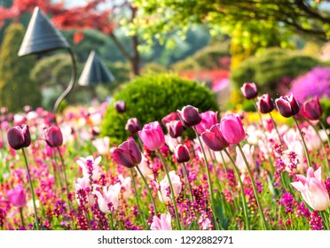 """Landscape photo of a field of red, purple and white tulip flowers in South Korea's """"Garden of Morning Calm"""""""