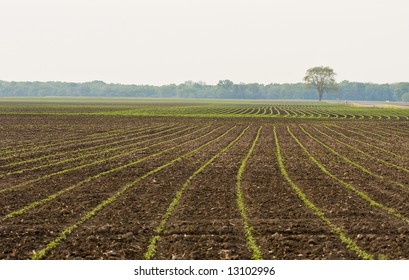 Landscape photo of field with tree in background
