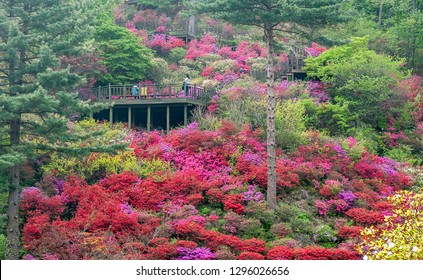 """Landscape photo of the """"Garden of Morning Calm"""" in South Korea with visitors walking on the scenic walkway, filled with trees, plants and flowers of many different colours."""