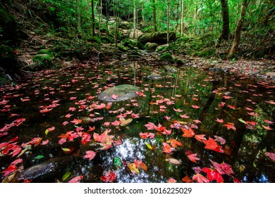 Landscape photo  leaves red maple in waterfall at Phu Kradueng National Park ,Thailand