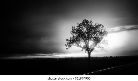 landscape photo with a lonely tree in black and white, photo with mood and contrast, focus on tree in the right side, tree as silhouette, sun shining in the tree, black foreground, sun in background