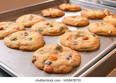 Landscape photo of multiple fresh, golden cookies with smarties fresh out of the oven still on the baking tray with soft light coming from behind.