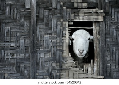 Landscape photo of sheep looking out from thatched bamboo hut