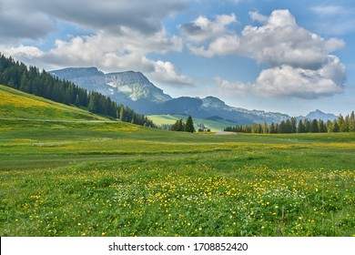 Landscape photo of Swiss Alps with clouds, meadow, wild flowers and green nature. Taken in June in summer near Lombachalp, Switzerland.