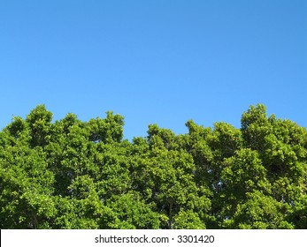 Landscape photo of the tops of a clump of trees