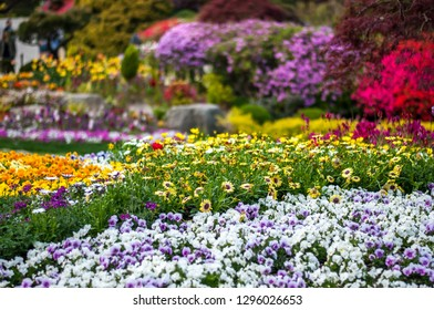 """Landscape photo of a wide variety of pretty and colourful flower beds in the """"Garden of Morning Calm"""" in South Korea."""