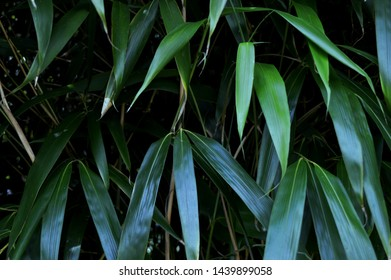 Landscape photograph of bamboo leaves