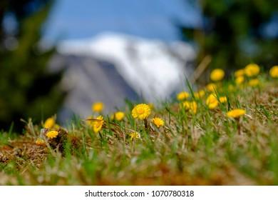 Landscape pictures Garmisch-Partenkirchen in spring