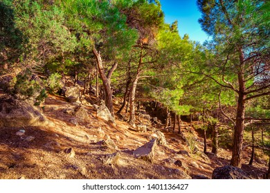 Landscape with pine forest and blue sky at sunset