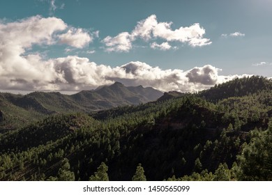 landscape with pinewood trees in the mountains of gran canaria, canary islands, spain