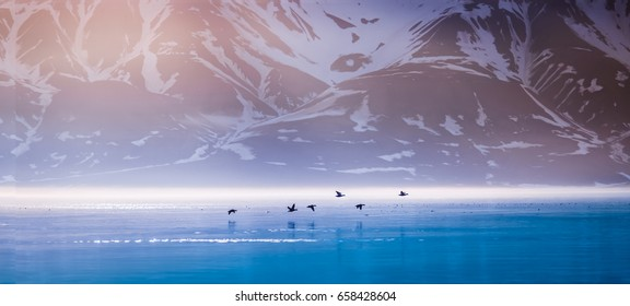 Landscape of a pink dawn in the morning in the mountains of Svalbard birds hunter in the reflection of the water of the fjord  Norway, Spitsbergen, Longyearbyen, Svalbard