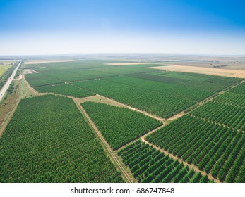 Landscape with plantations of orchards on background of blue sky, aerial view / Aerial view of plantations with orchards