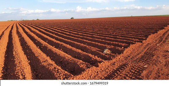 landscape of a plowed field ready for sowing