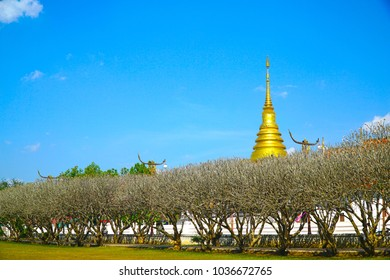 Landscape of Plumeria tunnel and Pagoda on blue sky background at Nan National Museum, Nan province, Thailand. Beautiful natural.