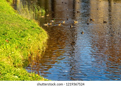 landscape of a pond or the lake in the park with ducks for a natural background