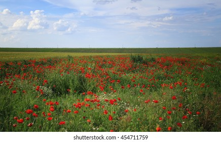 landscape with poppies field in summertime