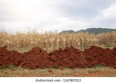 landscape prepare soild for corn field  agriculture.