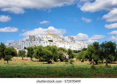 Landscape in Puglia, Italy, with the white city (citta bianca) Ostuni on a hill above an olive tree orchard under a cloudy sky.
