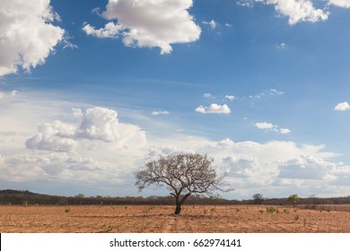 Landscape punished by long dry weather at northeastern region of Brazil