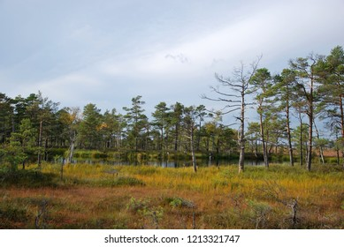 Ombrotrophic Raised Bog Images, Stock Photos & Vectors