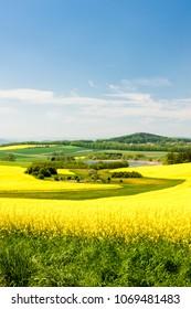 landscape with rape field, Czech Republic