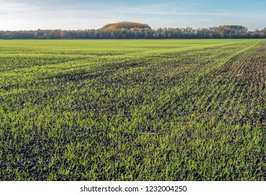 Landscape with recently sown young fresh green blades of grass in long rows growing in crumbled earth.  It is a sunny day with a lightly clouded sky in the Dutch autumn season.