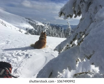 Landscape with red dog in winter mountains with snow