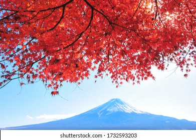 Landscape of Red Maple with Fuji Mountain Background in Autumn at Japan