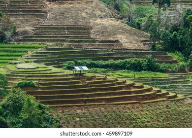 "Landscape rice terraces at ""Pa Pong Piang"" District Mae chaem of Chiang Mai Province Country of Thailand ."