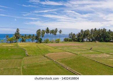 Landscape with rice terraces and palm trees by the sea.Rice plantations on Camiguin Island, Philippines,aerial view.