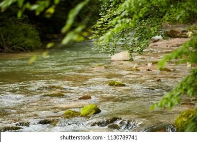 Landscape with a river flowing through deciduous forest