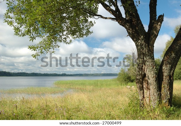 landscape or a river in the front spread a tree with green leaves