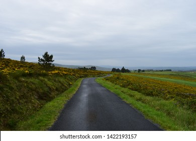 Landscape and road of the Camino de Santiago