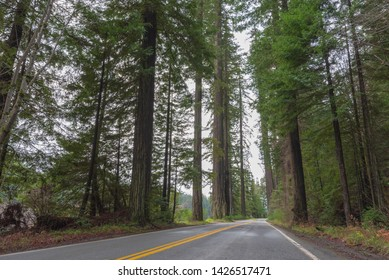 Landscape of road through redwood trees in California