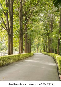 Landscape of road under the trees
