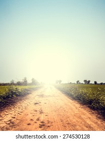Landscape of road way in summer with wild flower ,Vintage color toned,nature background, instagram filter