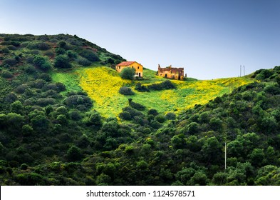 Landscape  Rural  farm over an hill with a meadow and yellow flowers