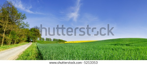 Landscape - rural path among fields and the blue sky
