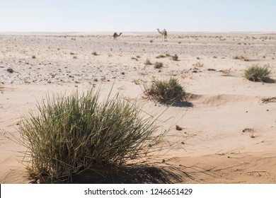 Landscape in Sahara desert with camels in the background