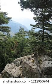 Landscape of Samaria Gorge in Crete (Greece). Typical pine trees along the hiking trail.