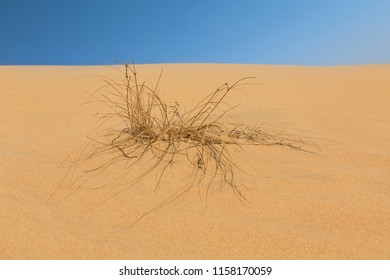 Landscape of a sand dune and grass with wind pattern