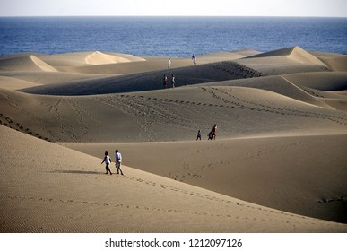 the Landscape of the Sanddunes at the Playa des Ingles in Town of Maspalomas on the Canary Island of Spain in the Atlantic Ocean.  Canary Islands, Maspalomas, February, 2008