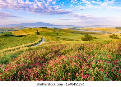 Landscape scenery early in the morning at Pienza in Val d'Orcia, Tuscany in Italy, with cypresses trees and green field with beautiful colors on summer day, travel destination in Europe
