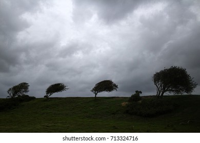 Landscape scenery of silhouette of trees against cloudy sky
