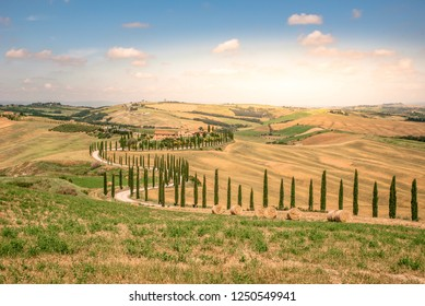 Landscape scenery of Tuscany in Italy, with cypresses trees and green field with beautiful colors on summer day, travel destination in Europe