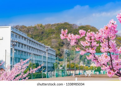 Landscape with school and cherry blossoms
