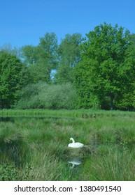 Landscape in Schwalm-Nette Nature Reserve,Rhineland,Nettetal,North Rhine westphalia,Germany